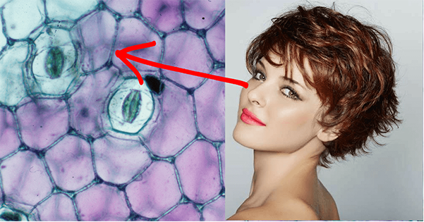 creama antirughe siero di vipera effetti funziona